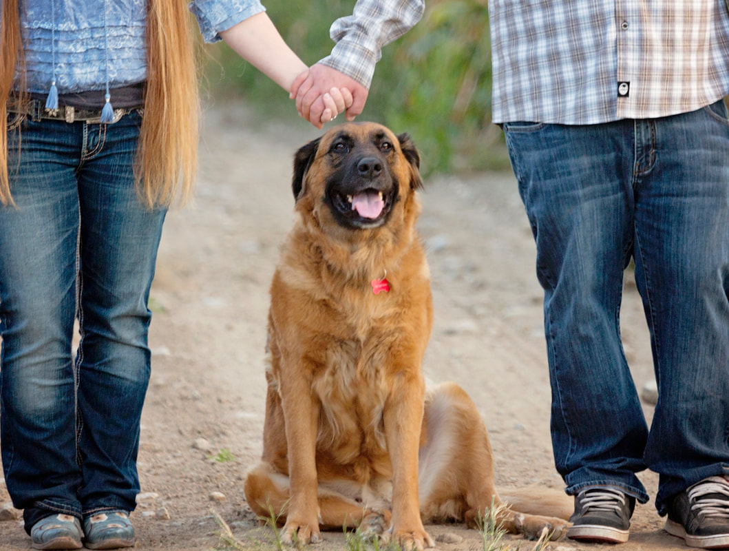 Engagement ring on cornstalk
