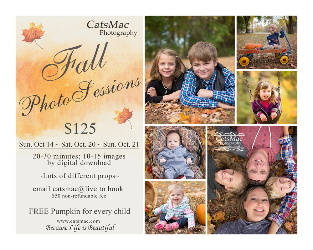 Fall Photography Mini Sessions CatsMac