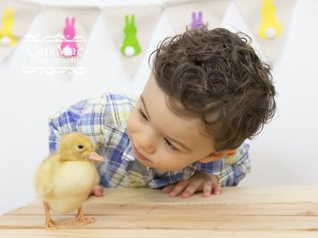 Duckling Easter Photo